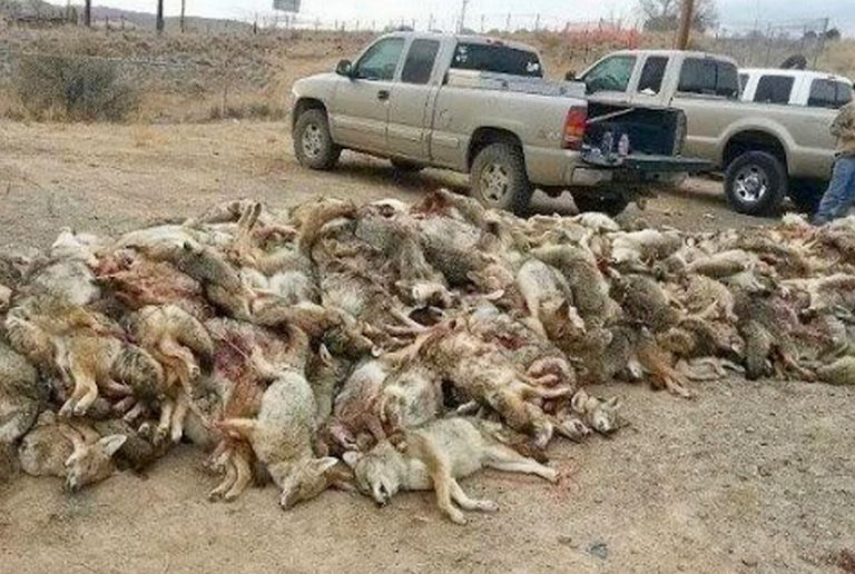 wildlife extermination by ranchers2